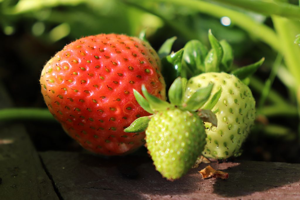 Erdbeeren - Knoblauch gegen Pilz.
